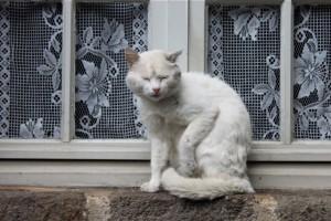 Fensterkatze 2