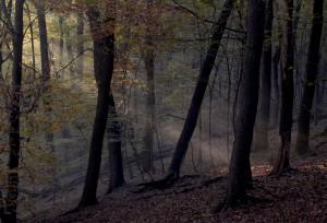 Herbst Licht